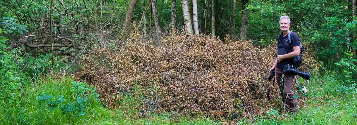 Die Birkenschösslinge dienen als Wegsperre