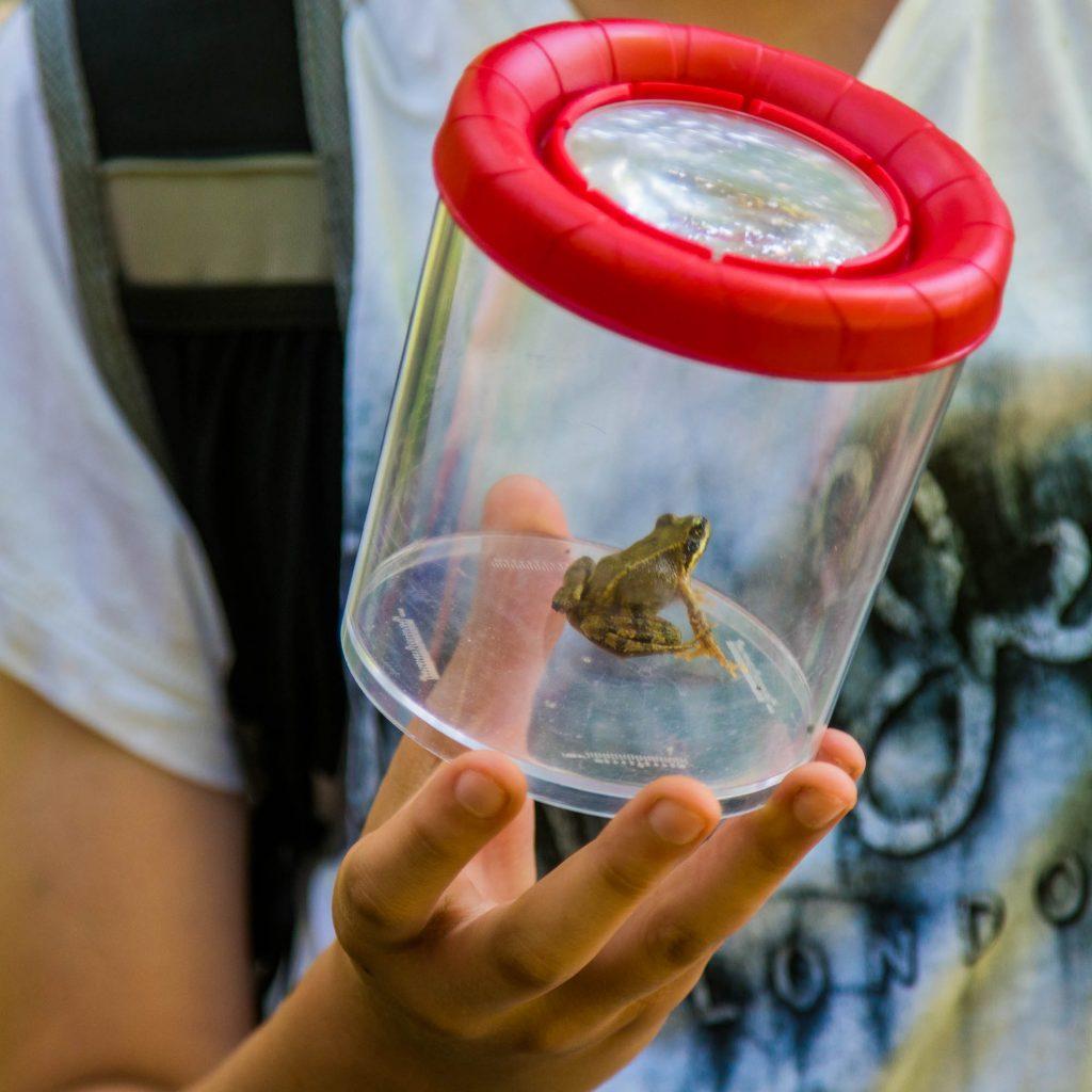 Genau hier wurde der Schmetterling Großes Ochsenauge gefunden