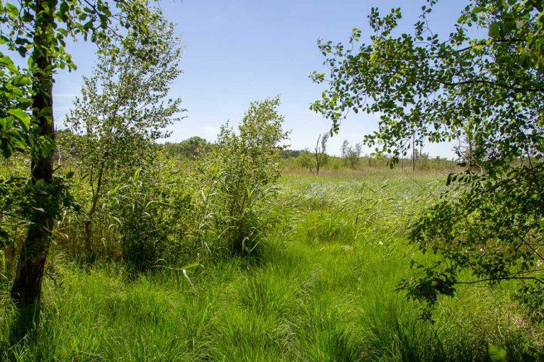 Freie Moorfläche im Nordosten