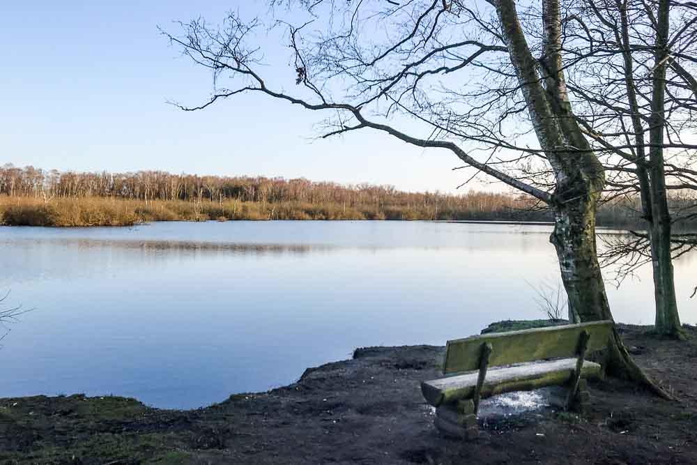 Bank am Moorsee, leider wird der Platz am See oft als Hundebadestelle missbraucht.